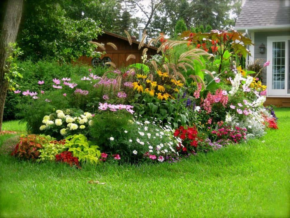 ce flori sa plantam in gradina