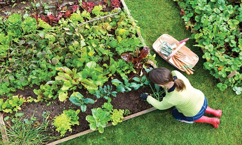 ce legume cultivam in gradina