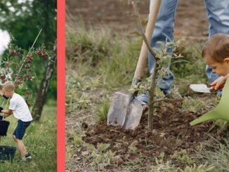 ce pomi sa plantam in gradina m