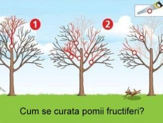 curatarea pomilor