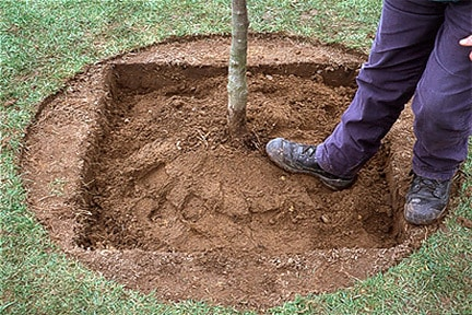 plantarea copacilor