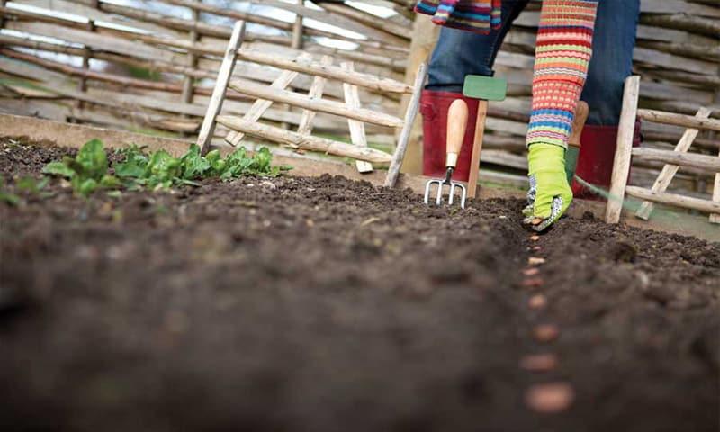 plantarea semintelor si a legumelor in gradina
