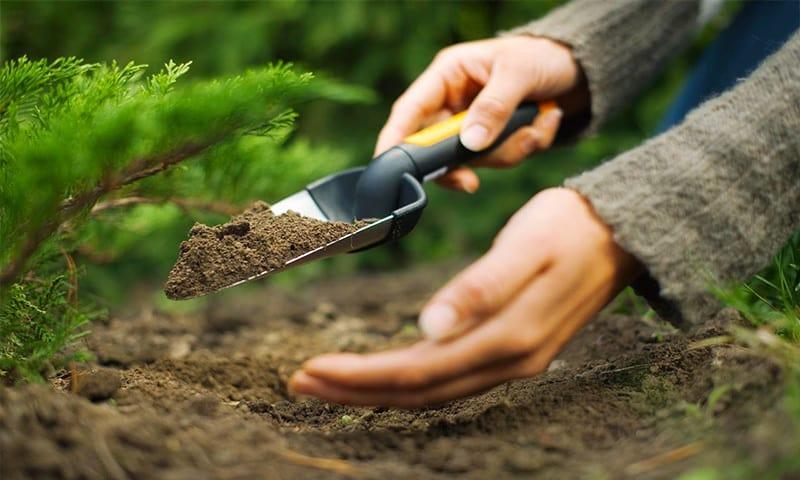 pregatirea terenului pentru plantare