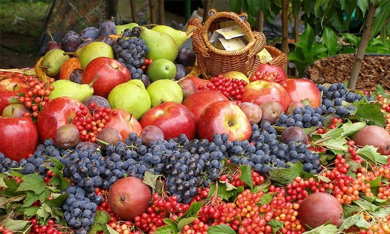 recolta fructe 1000 de metri patrati