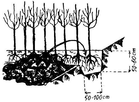 stratificarea pomilor