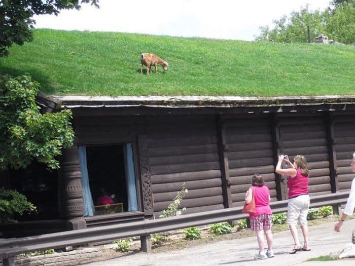 cum sa-ti faci un acoperis verde