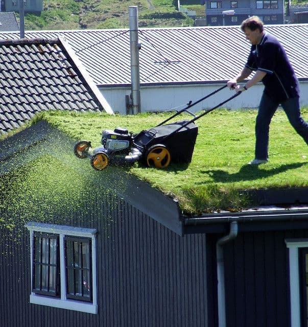 cum sa tunzi iarba pe acopris