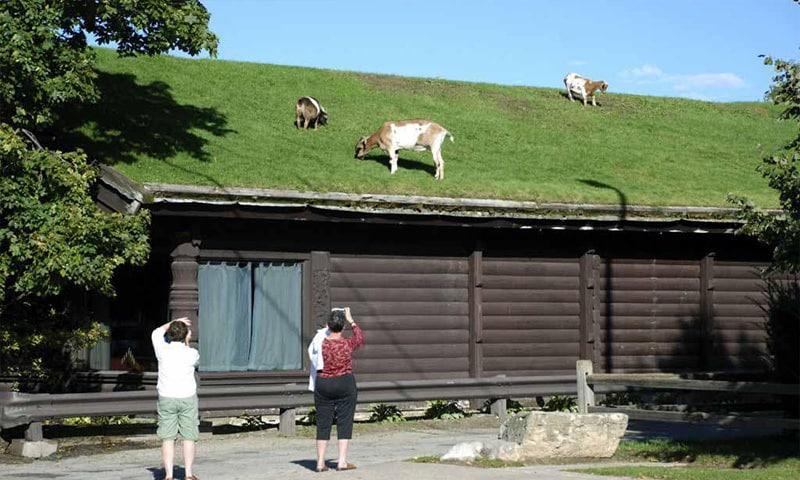 cum se face un acoperis verde cu gazon sau iarba