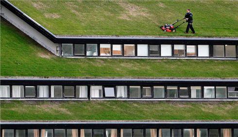 cums a tunzi iarba pe acoperis