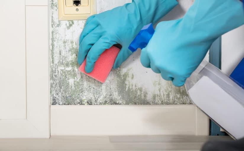 scoaterea mucegaiului de pe perete