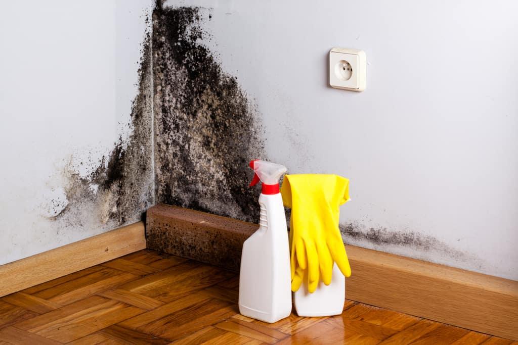 solutii antimucegai pentru perete cu igrasie