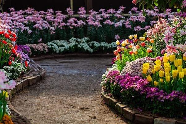 gradina cu flori de primavara