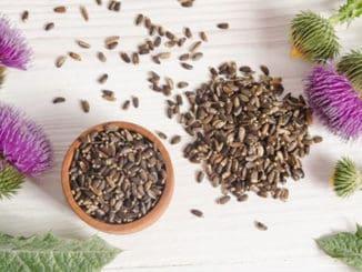 seminte si plante de armurariu