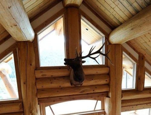 cap de cerb casa din lemn masiv