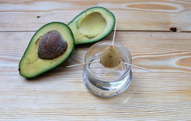 inmultire fruct de avocado