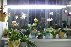 iluminat artificial orhidee