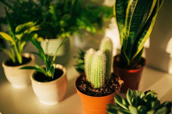 plante de apartament nepretentioase