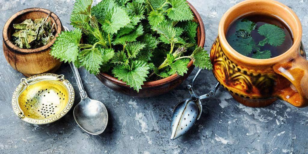 stinging ceai de urzică pentru pierderea în greutate
