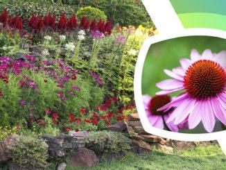 flori care infloresc tot anul gradina