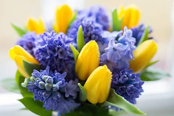 flori de primavara lalele si zambile