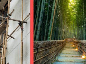 bambus la ce e bun bambusul in constructii
