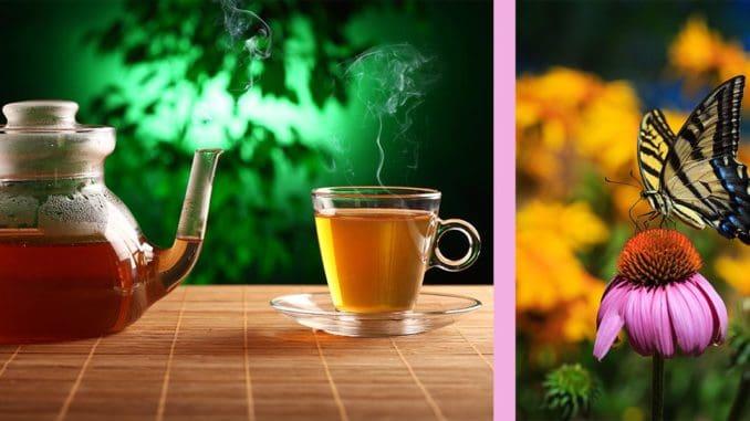 ceai de echinacea beneficii